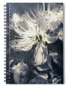 The Light Of Spring Petals Spiral Notebook