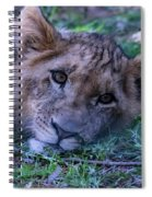 The Lion Cub Spiral Notebook