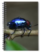 The Little Bug In The Rain Spiral Notebook