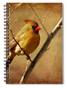 The Little Mrs. Spiral Notebook