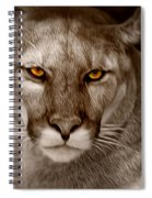 The Look - Florida Panther Spiral Notebook