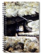 The Lookout Lynx Spiral Notebook
