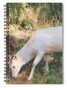 The Magical Deer 3 Spiral Notebook