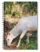 The Magical Deer Spiral Notebook