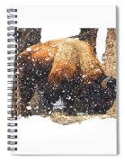 The Majestic Bison Spiral Notebook
