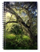 The Mighty Oaks Of Garland Ranch Park 1 Spiral Notebook
