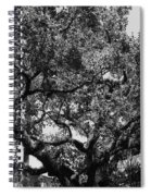 The Monastery Tree Spiral Notebook