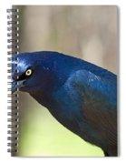 The Moocher Spiral Notebook
