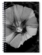 The Morning In Glory Spiral Notebook