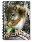 The Most Adorable Baby Squirrel Spiral Notebook