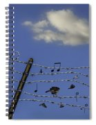 The Musical Barbed Wire Birds Spiral Notebook