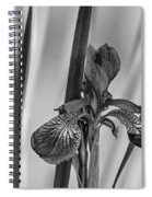 The Mystery Of Spring 2 Bw Spiral Notebook