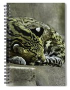 The Napping Rock Spiral Notebook