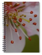 The Nectarine Blossom  Spiral Notebook