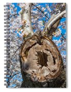 The Old Cherry Tree Spiral Notebook