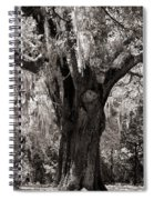 The Old Oak Is Still Standing Spiral Notebook