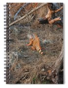 The Orange Iguana Spiral Notebook