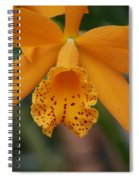 The Orange Orchid Spiral Notebook