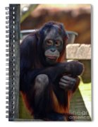 The Orangutan Spiral Notebook
