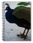 The Peacock In The Royal Garden In Winter Spiral Notebook