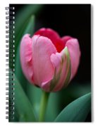 The Peculiar Pink Tulip Spiral Notebook