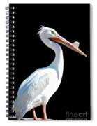 The Pelican  Spiral Notebook