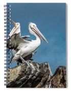 The Pelicans Spiral Notebook