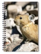 The Pika Spiral Notebook