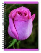 The Pink Rose Spiral Notebook