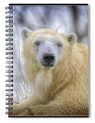 The Polar Bear Stare Spiral Notebook