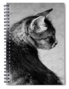 The Purrfect Glance Back Spiral Notebook