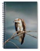 The Raptor - Osprey Spiral Notebook