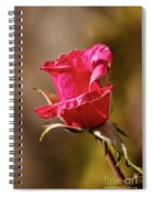The Red Bud Spiral Notebook