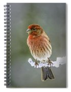 The Red Finch Spiral Notebook