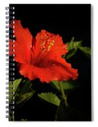 The Red Hibiscus Spiral Notebook