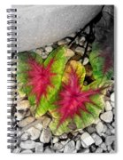 The Red Sisters Spiral Notebook