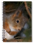 The Red Squirrel 4 Spiral Notebook