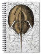 The Remnant Spiral Notebook