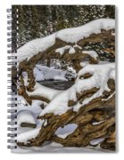 The Roots Of Winter Spiral Notebook
