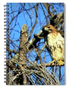 The Search Red Tail Hawk Art Spiral Notebook