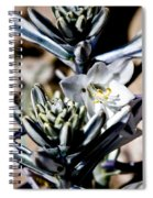 The Shy Desert Lily Spiral Notebook