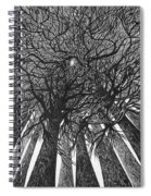 The Skyscrapers Of The Forest Spiral Notebook