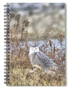 The Snowy Owl Spiral Notebook