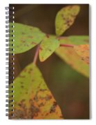 The Soft Intensity Of Fall 6210 H_2 Spiral Notebook