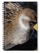 The Sora Spiral Notebook