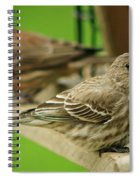Two Finch's Spiral Notebook