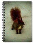 The Squirrel In The Winter Garden Spiral Notebook