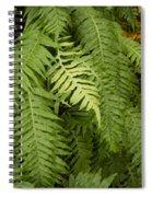 The Standout Fern Spiral Notebook