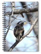 The Starling Spiral Notebook