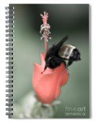 The Sweet Spot Spiral Notebook